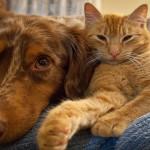 Собаки любящие кошек