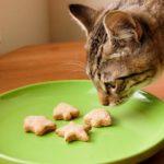 Можно ли кошкам печенье