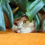 Алоэ для кошек