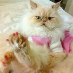 Уход за домашними кошками