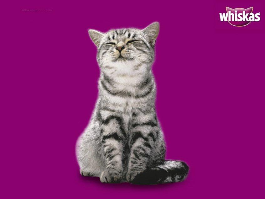Как определить породу кошки