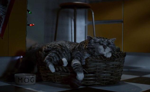 Кошка Мог