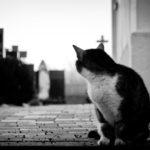 Поведение кошки после смерти хозяина