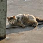 Почему кот перестал себя вылизывать