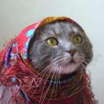 Болезнь Паркинсона у кошек