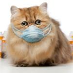 Капли от насморка для кошек — 4 разных препарата