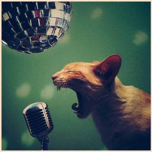 Как проверить слух у кошки или кошачья глухота