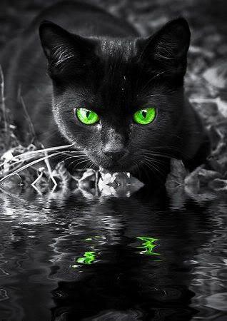 Сухой глаз у кошки