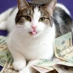 Кошка лежит на деньгах