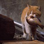 Можно ли и стоит ли давать кошке рыбу