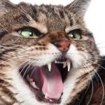 Витамины для зубов кошек