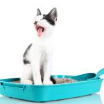 Корм для кошек от запоров