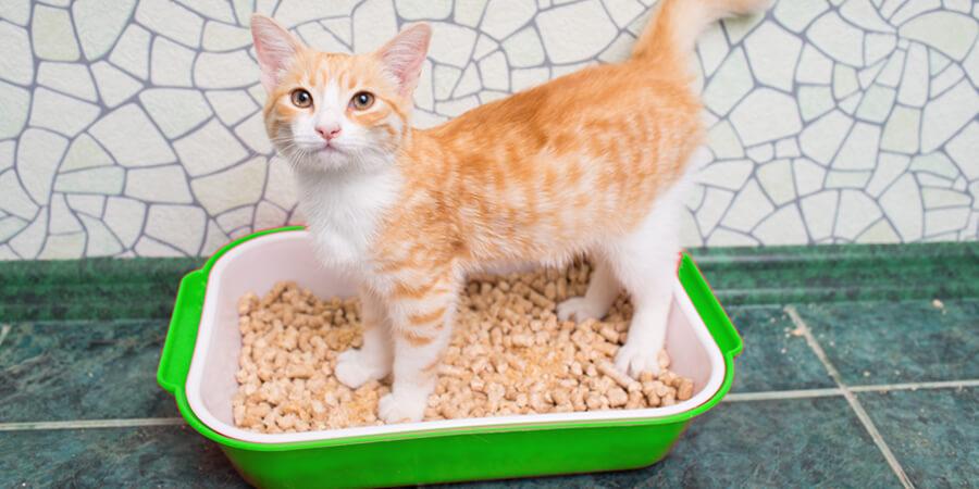 аллергия у кота чем лечить лекарства