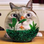 Как защитить аквариум от кота