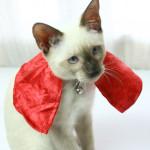 Как сшить плащ-костюм для кошки