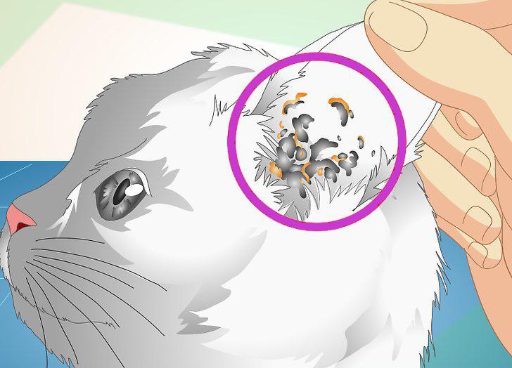 Анализ на ушного клеща у кошек