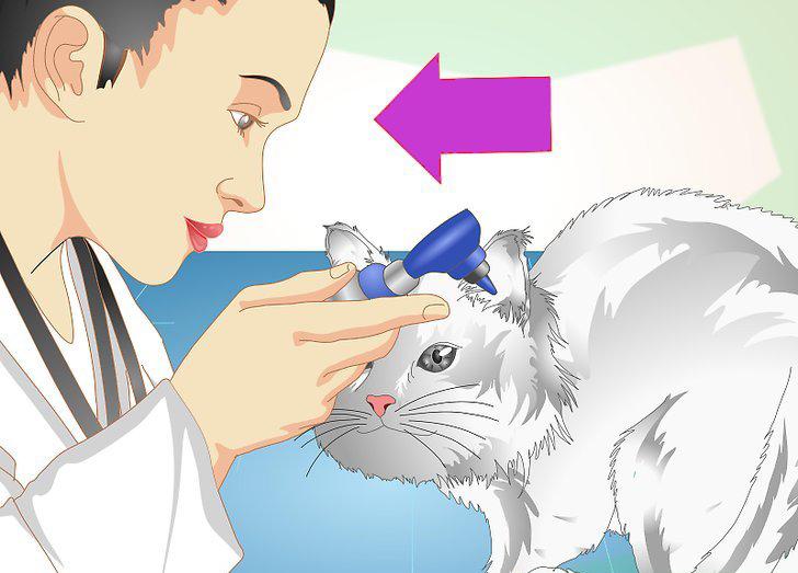 Анализ на ушных клещей у кошек