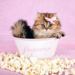 Можно ли кошкам попкорн