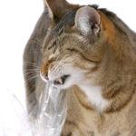 Кот грызет пластик — в чем тут дело?
