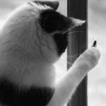 Кот съел жука