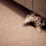 Как найти кошку в квартире