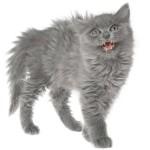 У пожилых кошек судороги от высокочастотных звуков