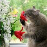 Запахи, привлекающие кошек