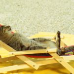 Какая температура тела бывает у кошек?