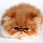 1 марта — Всемирный день кошек в России