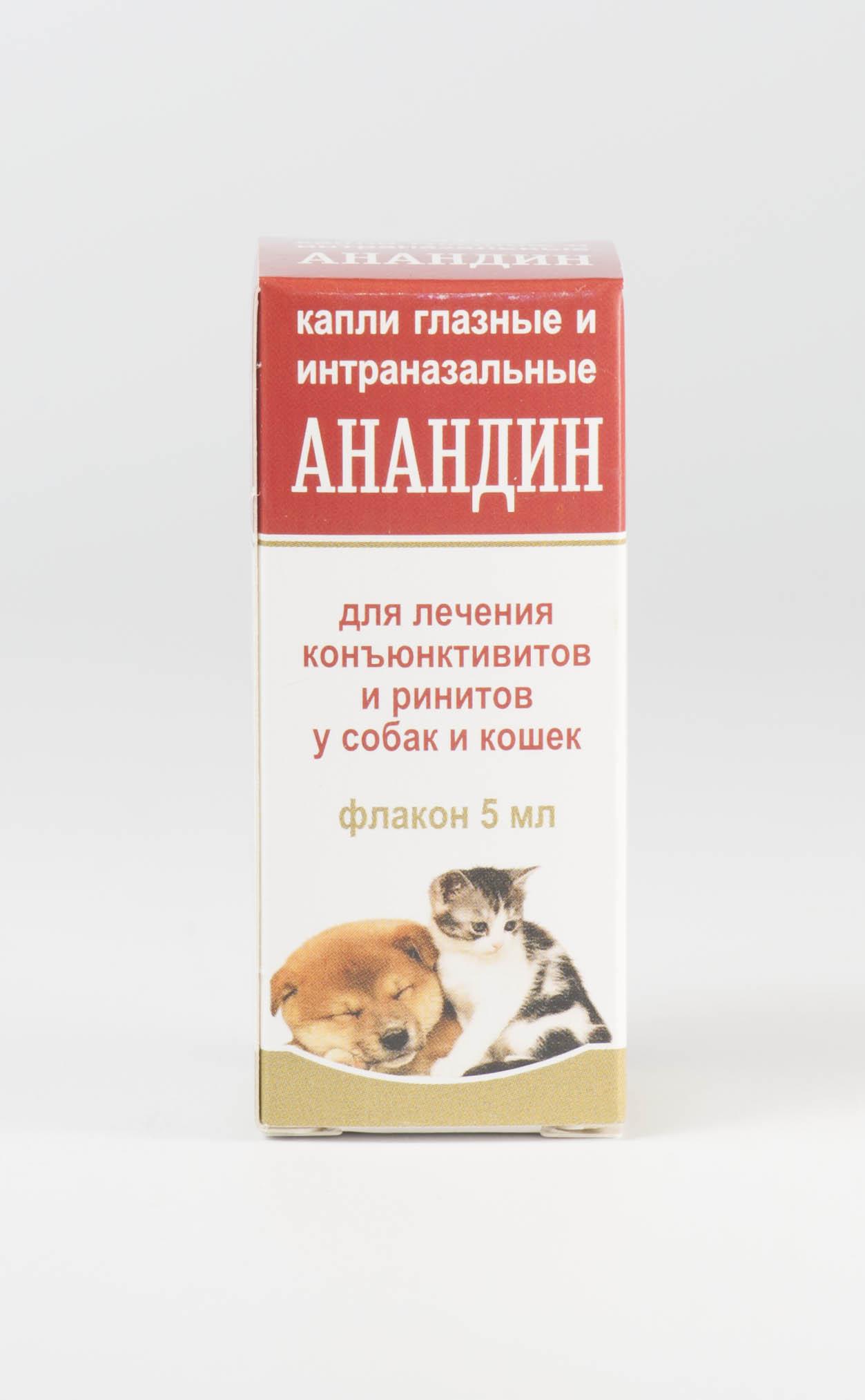 Как вылечить кота от насморка