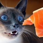 Болезни кошек от корма