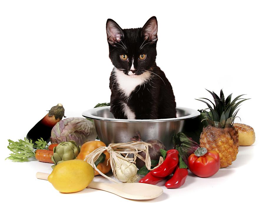 лечебные корма для кошек при заболевании печени