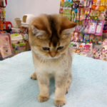 Международная выставка кошек в парке «Сокольники» 3-6 января