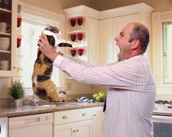 Каких людей любят кошки, Вокруг кота
