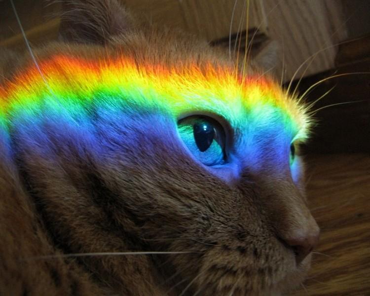Различают ли коты цвета