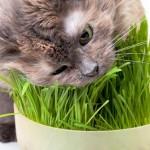 Полезные травы для кошек