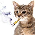 Кот и сигареты