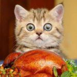 Можно ли кошке индейку
