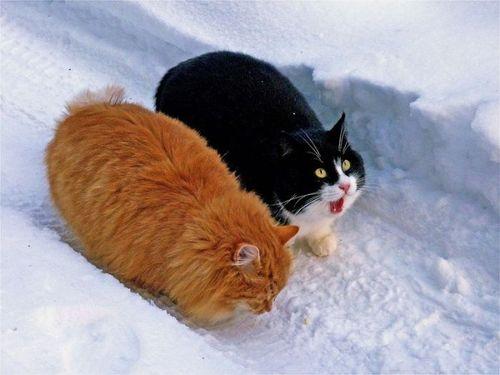 1 марта - Всемирный день кошек в России