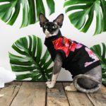 Подготовка к покупке котенка сфинкса